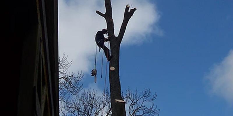 Tree Surgeon Services Northumbeland